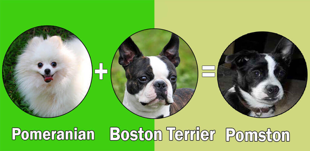 Best Dog Breed Combinations