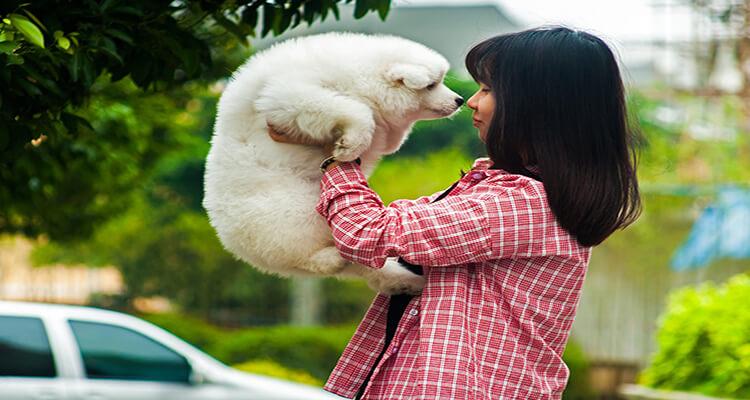 Samoyed dog breed Personality, Appearance, characteristics