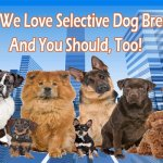 Why We Love Selective Dog Breeding (And You Should, Too!)