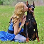 Top 10 amazing facts about Doberman