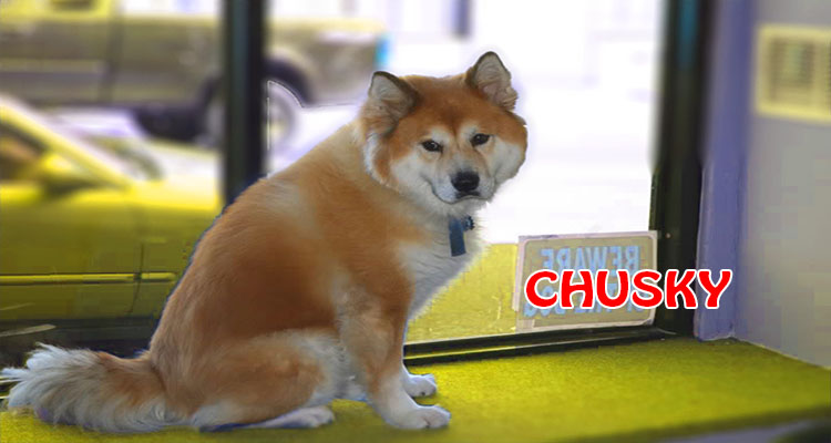 Chusky hd photo