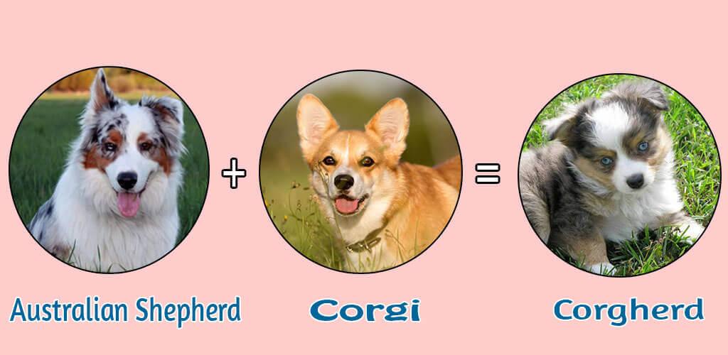 Corgherd