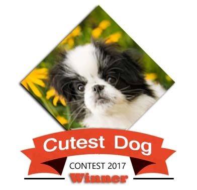 Cutest dog contest 2017 Winner
