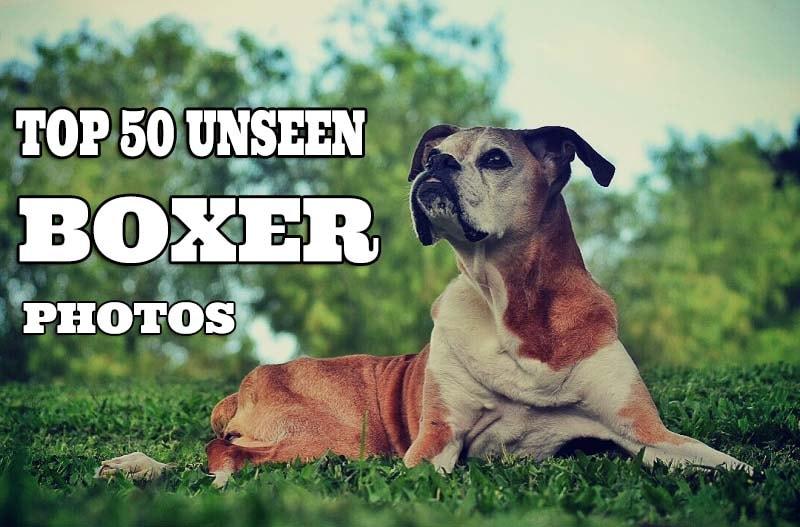 Unseen boxer photos