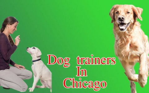 Dog trainers in Chicago