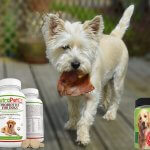 Probiotics for Dogs – A Pet Owner's Guide