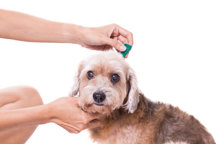 leptospirosis disease in dogs