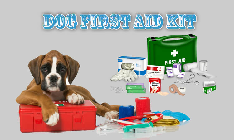 Essential Products for Dog First Aid Kit