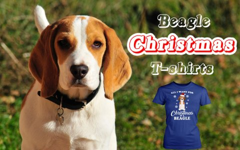 Beagle T-shirts for Christmas