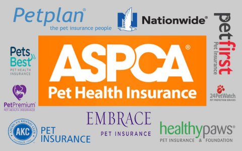 Best pet insurance for dog
