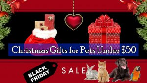 Christmas Gifts for Pets Under $50