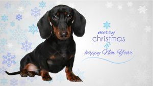 Christmas T-shirts for Dachshund