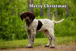 German Shorthaired Pointer Christmas T-shirts