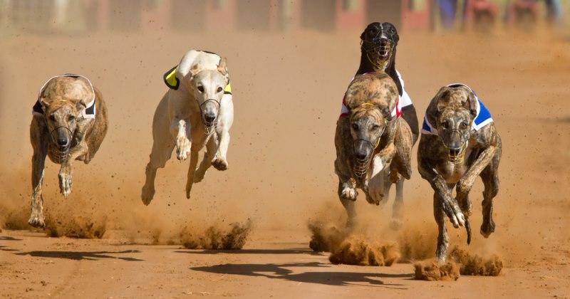 Greyhoundspeed