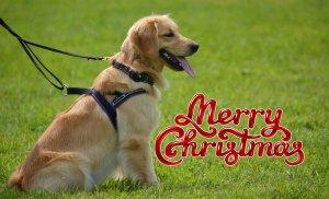 Labrador Retriever T-shirts for Christmas