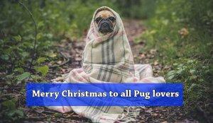 Pug Dog T-shirts for Christmas
