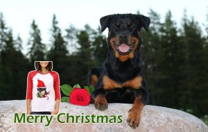 Rottweiler T-shirts for Christmas