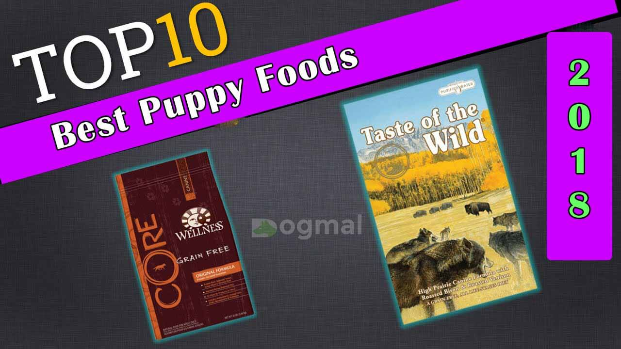 Best Puppy Foods