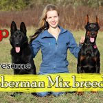 Top 10 Awesome Doberman Mix breeds