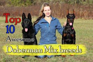 Doberman cross breeds