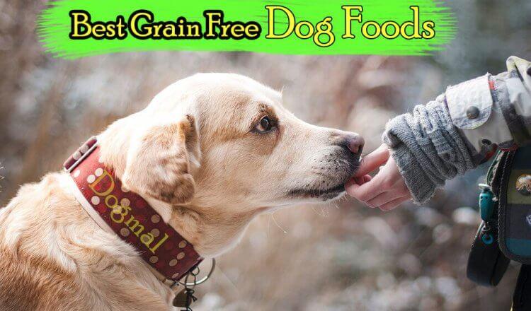 Grain Free Dog Foods