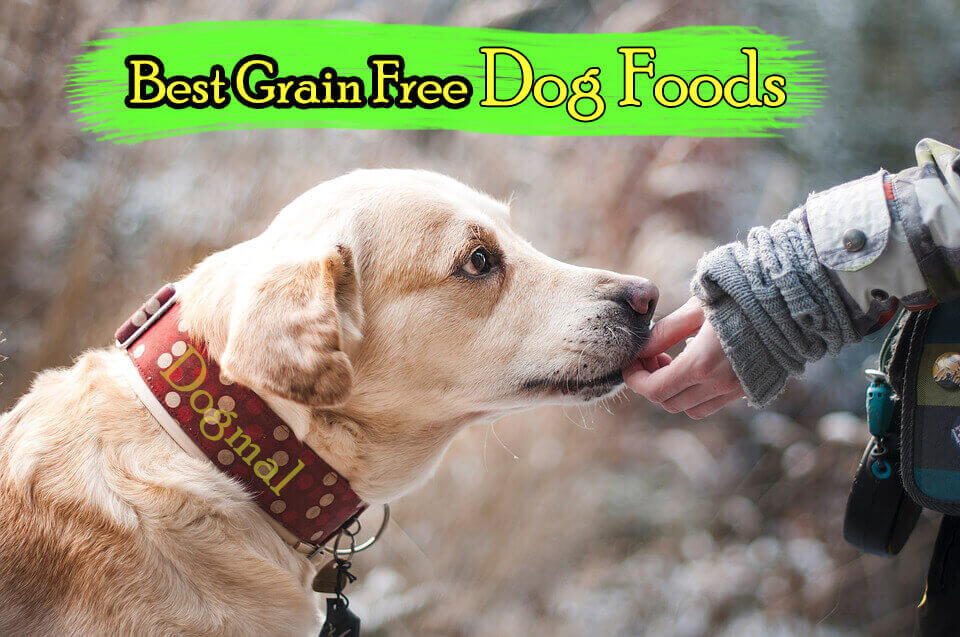 Grain Free Dog Foods