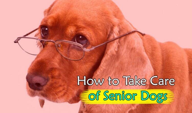How to take care Senior Dogs
