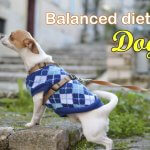 Balanced diet for the Dogs