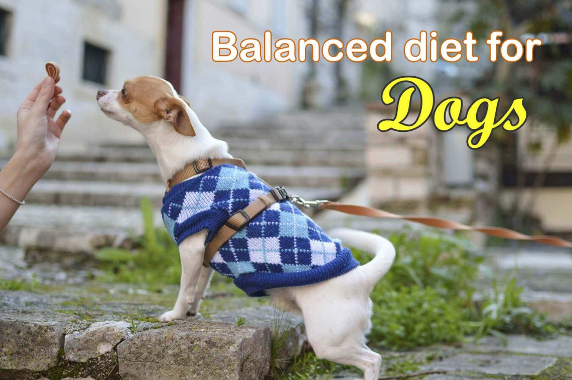 balanced-diet-for-dog