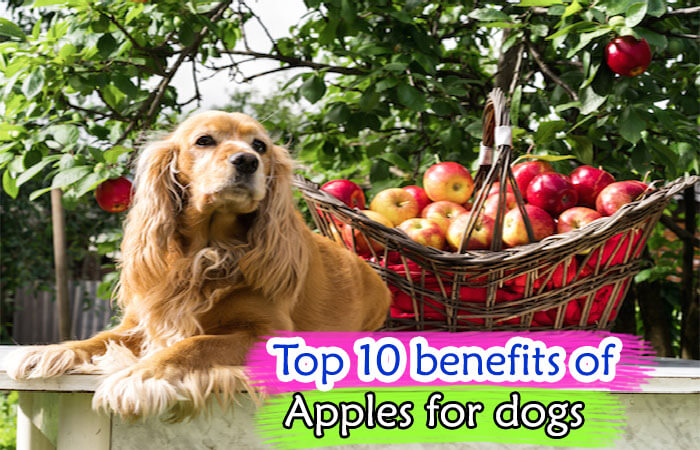 benefits of Apples for dogs