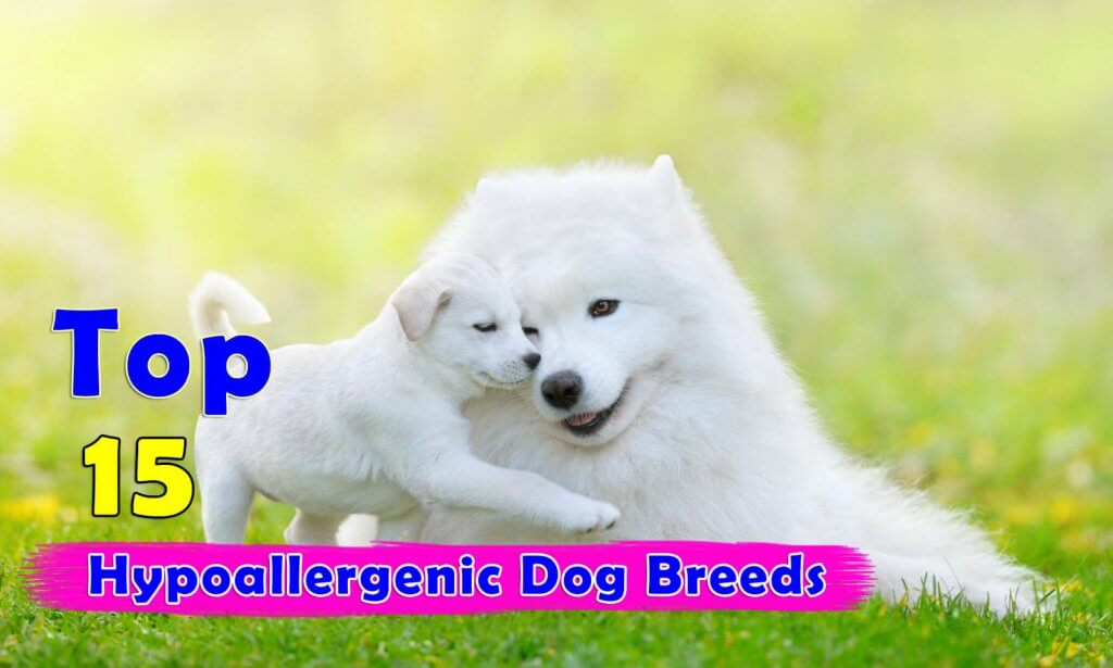 Hypoallergenic Dog Food Reviews
