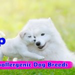 Top 15 Hypoallergenic Dog Breeds