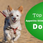 Top 10 Appetite Stimulants for Dogs