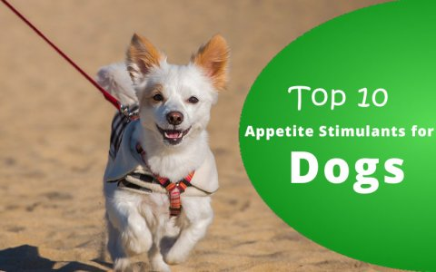 Appetite Stimulants for dogs