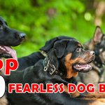 TOP 10 FEARLESS DOG BREEDS IN THE WORLD