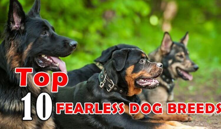 FEARLESS DOG BREEDS
