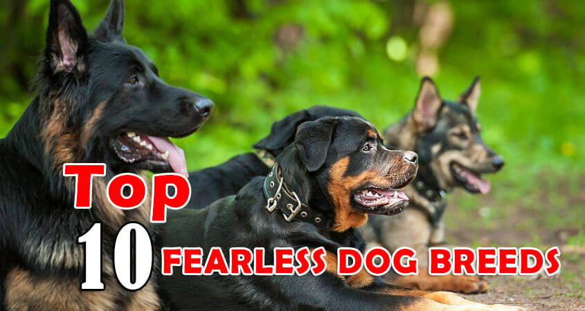 FEARLESS DOG BREEDS