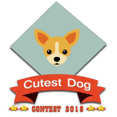 Cutest dog contest winner 2018