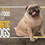 The Best Foods for Diabetic Dogs