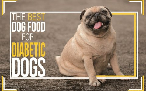 Best Foods for Diabetic Dogs