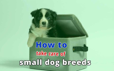take care of small dog