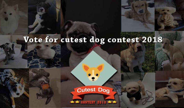 vote for cutest dog contest 2018