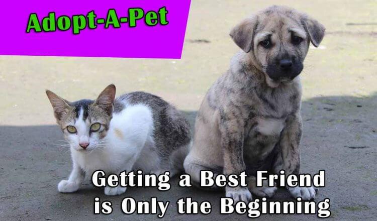 Adopt-pet