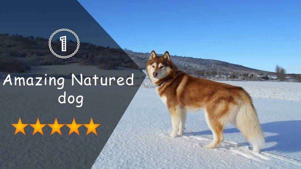 Amazing Natured dog