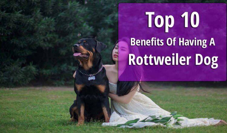 Rottweiler benefits