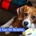 Finding the Best Toys for Beagles – A Buying Guide