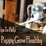 5 Tips To Help Your Puppy Grow Healthy