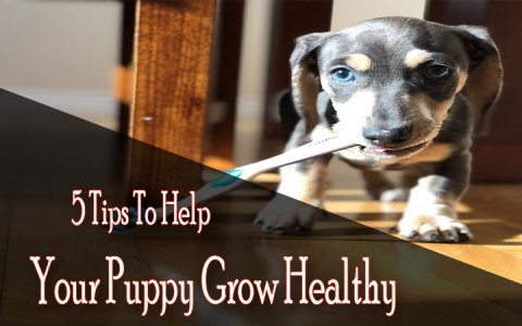 Help Your Puppy Grow Healthy