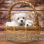 Do It Yourself Dog Toys From Things Around The House