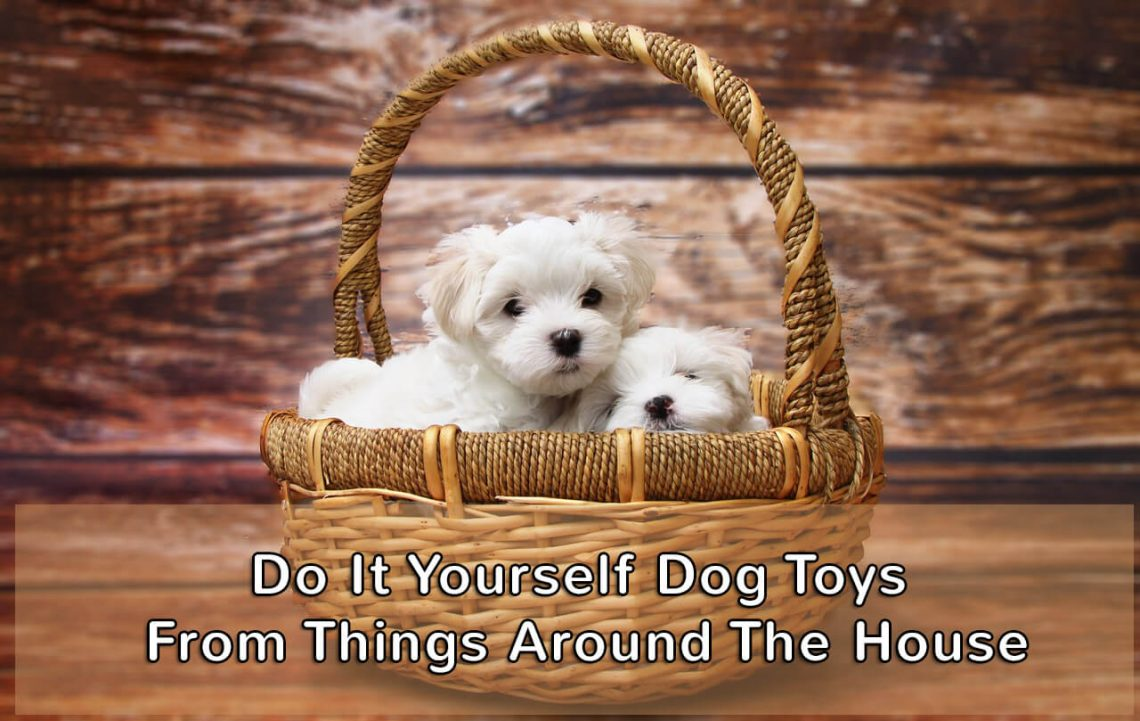 dog toys things around house